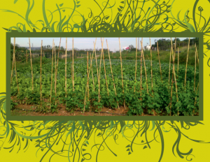 agricultura-social-amb