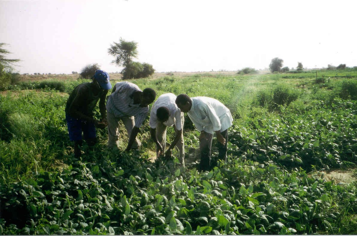 mauritania-desarrollo-sostenible